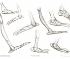 010_Ant-Legs-&-Feet-Profiles