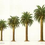 Palms-OL