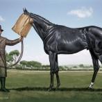 025_Avante-Card-Ugly-Horse